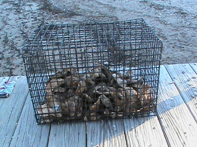 Caging the Oysters